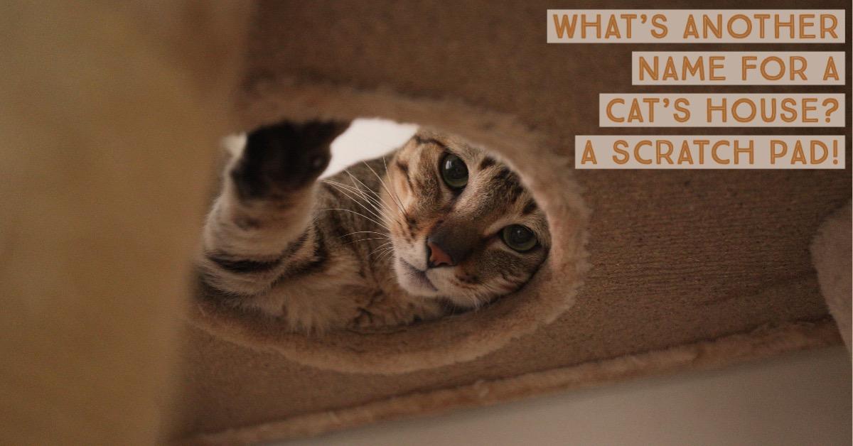 Funny cat joke about a scratch pad