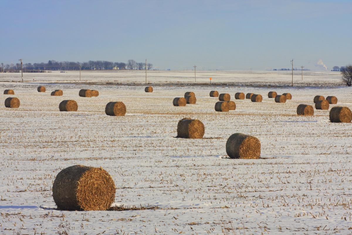 Cornstalk bales in a snowy field in Iowa