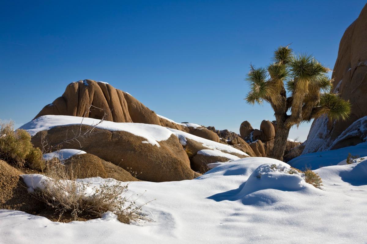 Joshua Tree California snow