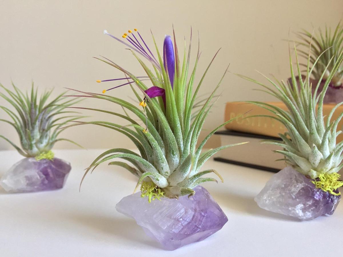 amethyst air plant crystals