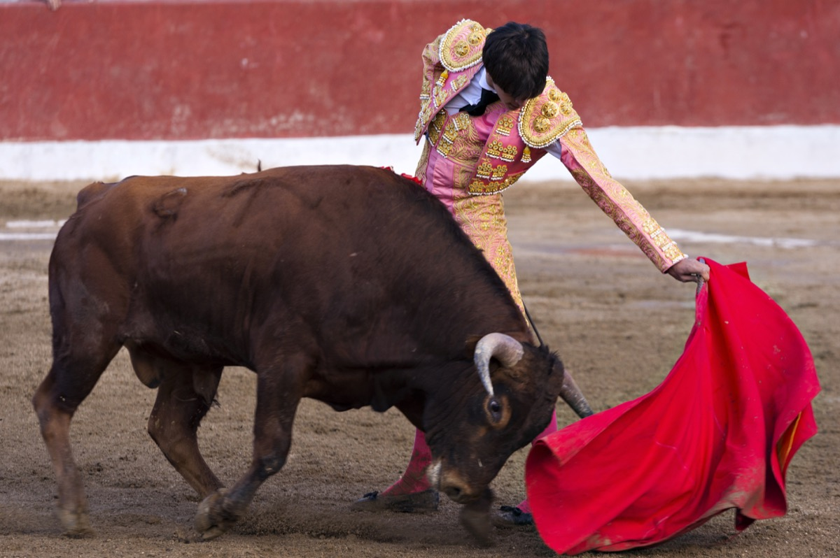 matador waving a red flag in front of bull