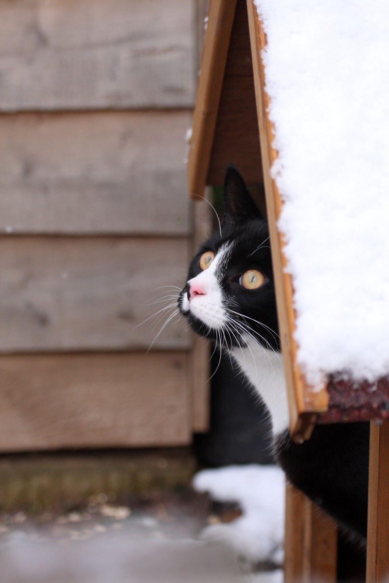 Cat inside an outdoor pet house in the winter