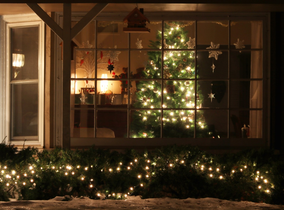 christmas tree in front of a window