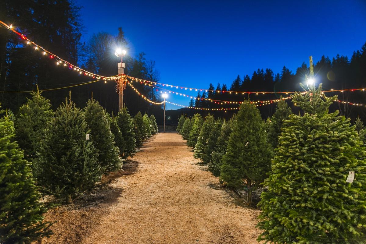 christmas tree sale at night