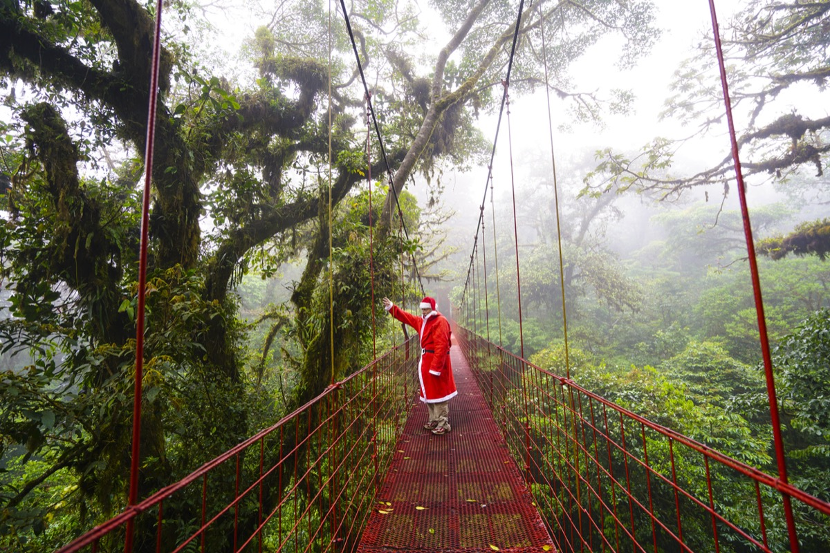 Santa Claus is coming, waving from the suspension bridge in the cloud forest of Monteverde, which is national Reserve with 10500 hectares of cloud forest from which 90% is virgin. It is covered by cloud, foggy, with a lot of moisture and water drops coming from plants. The mosses are covering plants, ground and on trees there are a lot of parasite plants. Water from fog is condensing everywhere. The walking paths are only in touristic part of forest. It is famous touristic spat in Costa Rica.