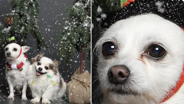 dog holiday photo existential crisis