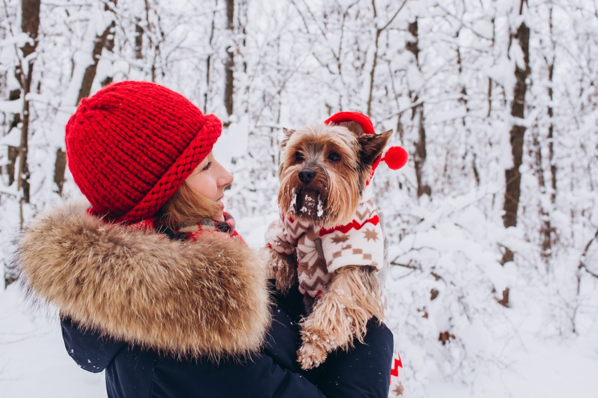 Cute dog in a sweater in his mom's arms