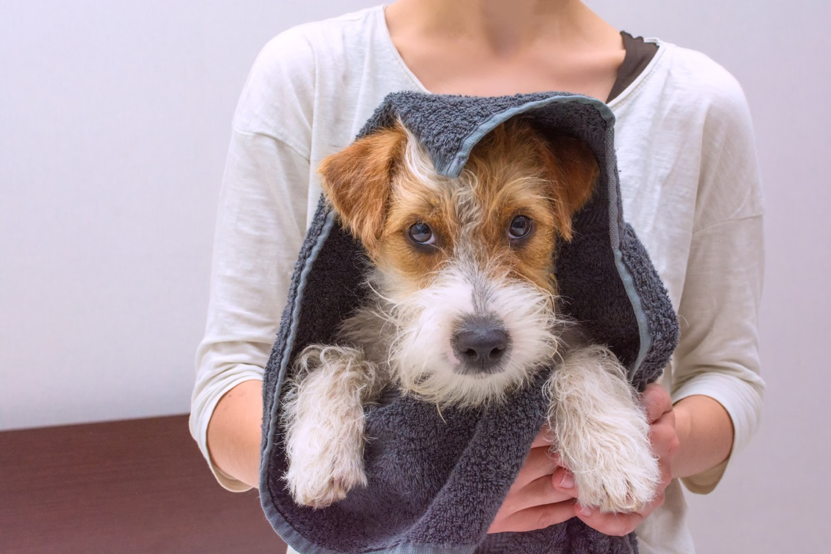 Cute dog wrapped in a towel