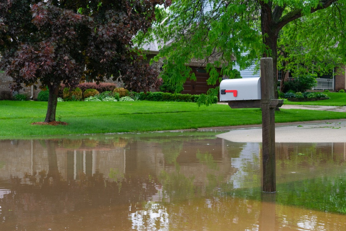 flooded lawn with trees and white mailbox