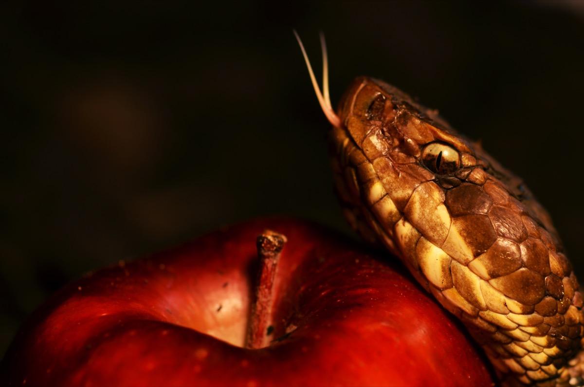 snake beside the forbidden apple