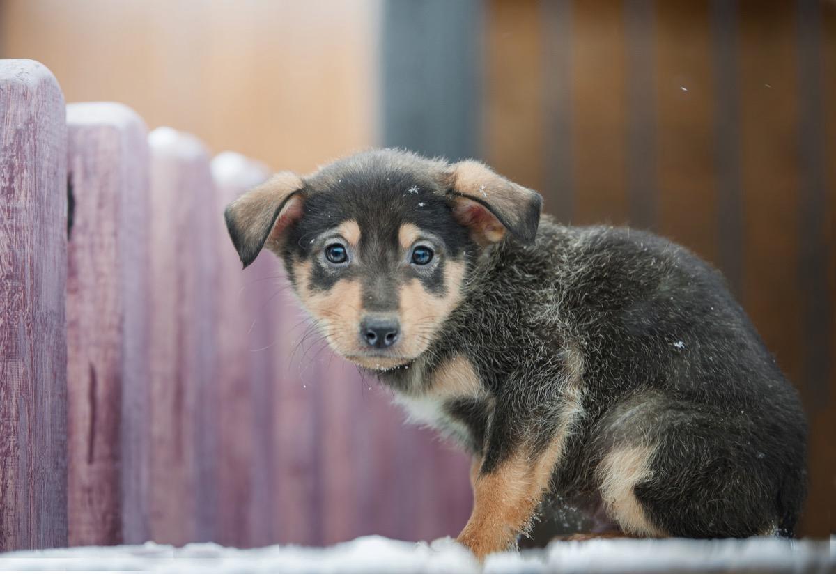 little lost puppy
