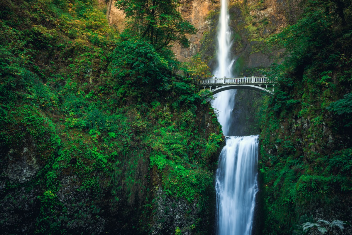 bridge crossing a waterfall in a lush forest