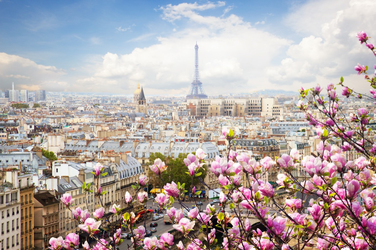 pink flowers in front of a paris skyline