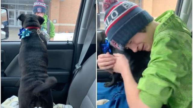 12-year-old Carter reunites with lost pug Piper