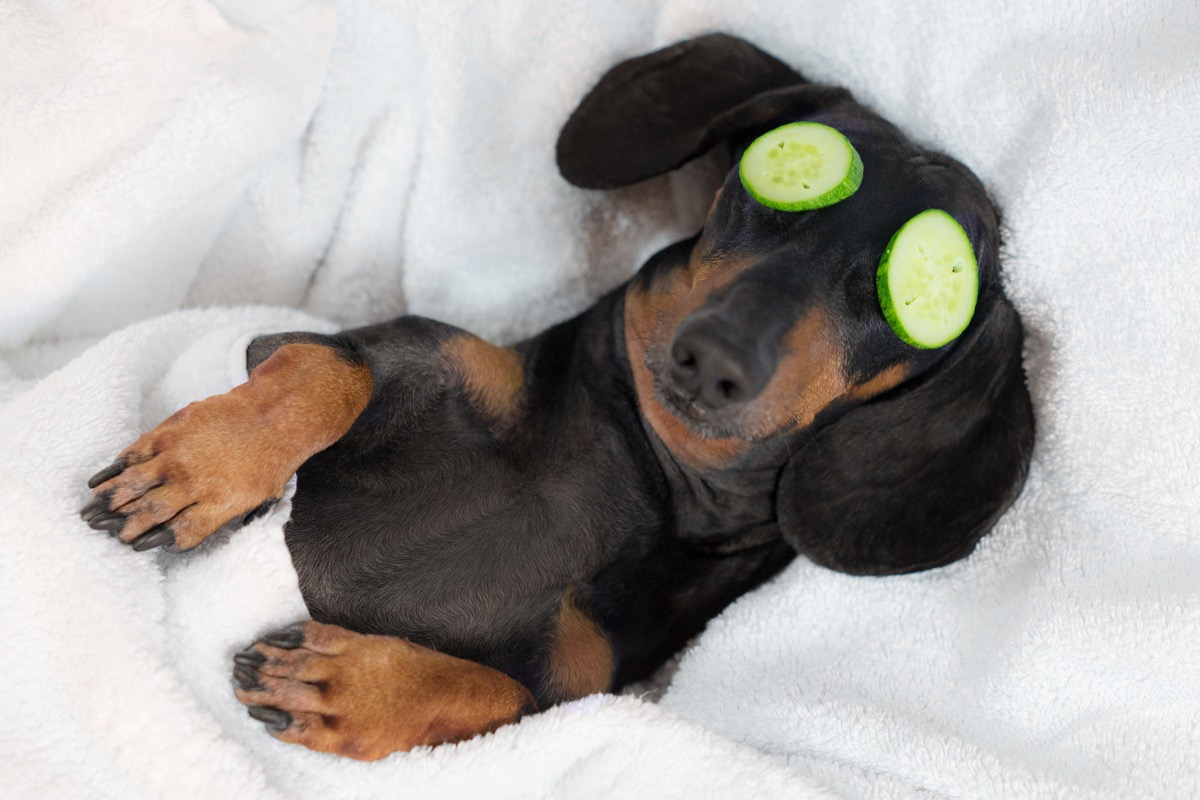 Puppy relaxing cucumbers on eyes