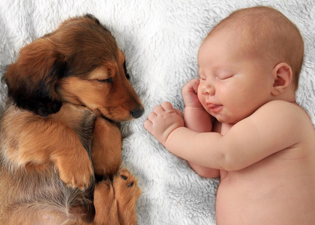 animals napping
