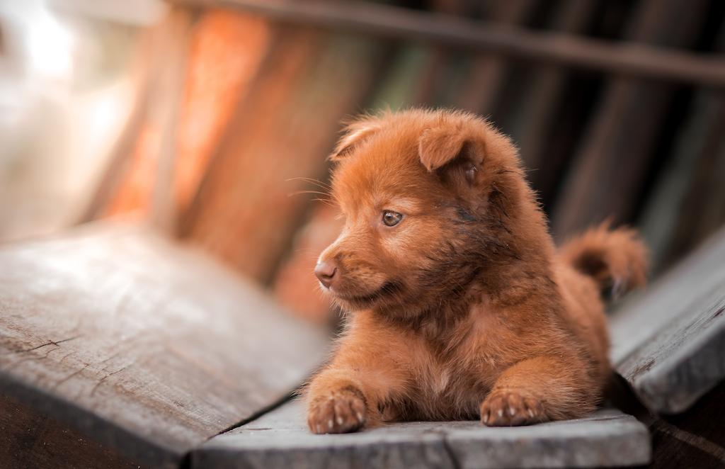 puppy-sunshine