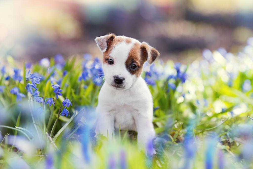 puppy-in-field