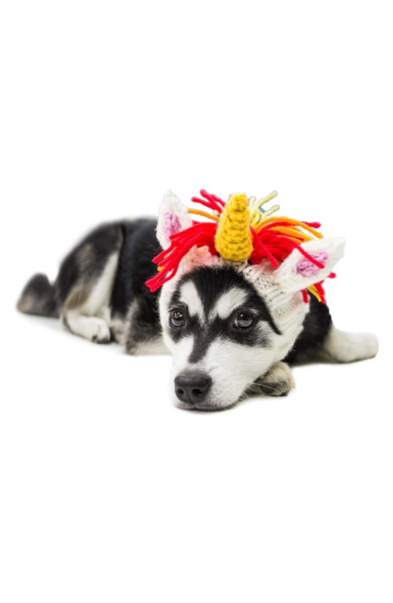 black and white dog in unicorn crochet dog snood