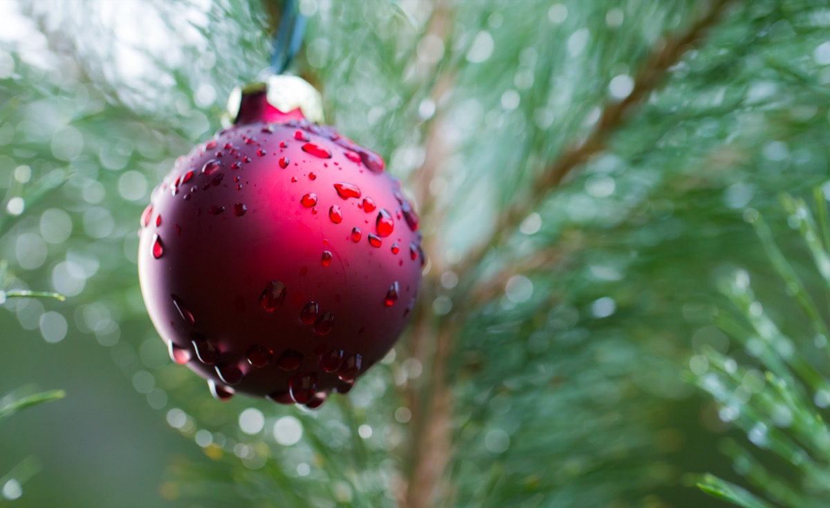 wet christmas tree with red ornament with water droplets
