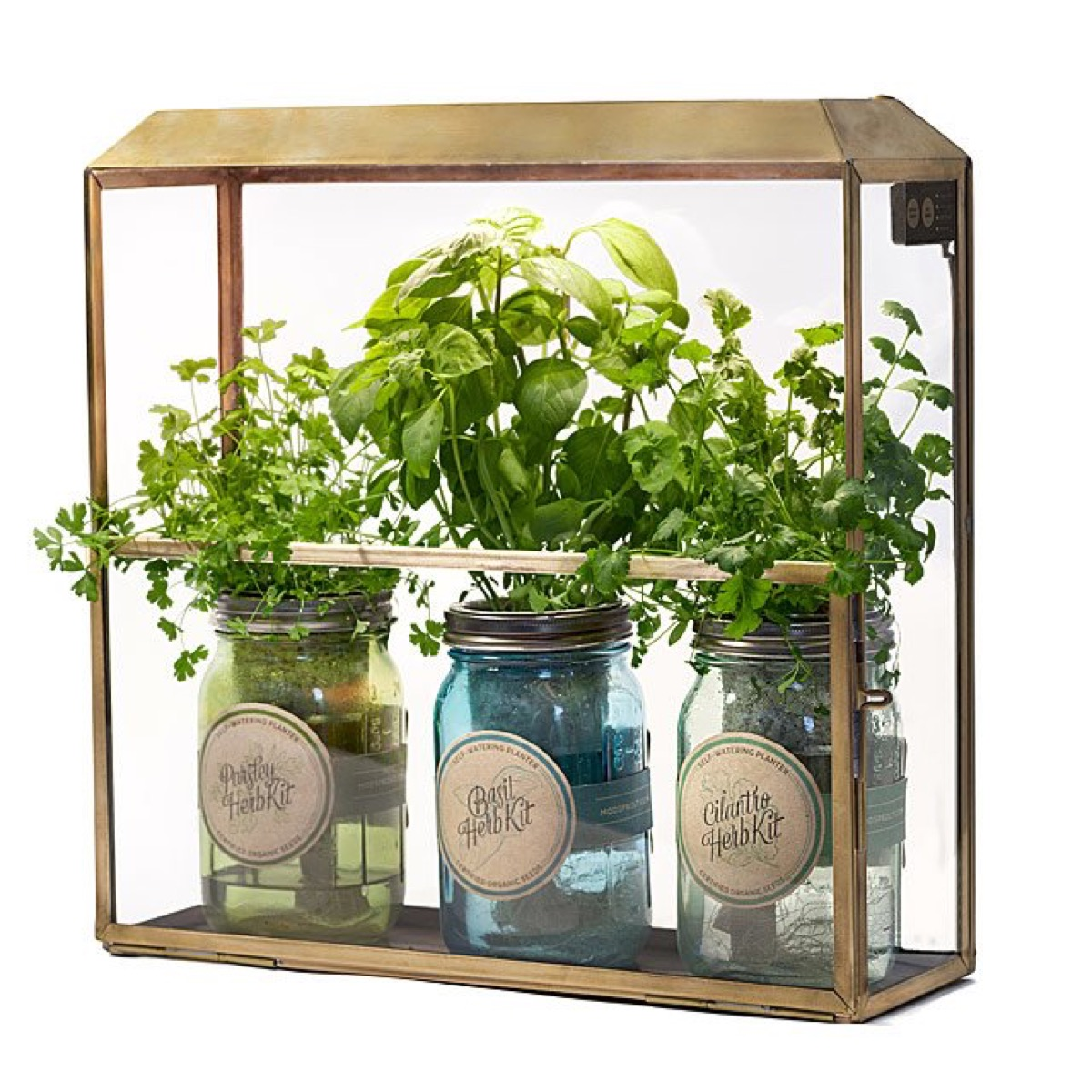 plants in wall mounted grow house