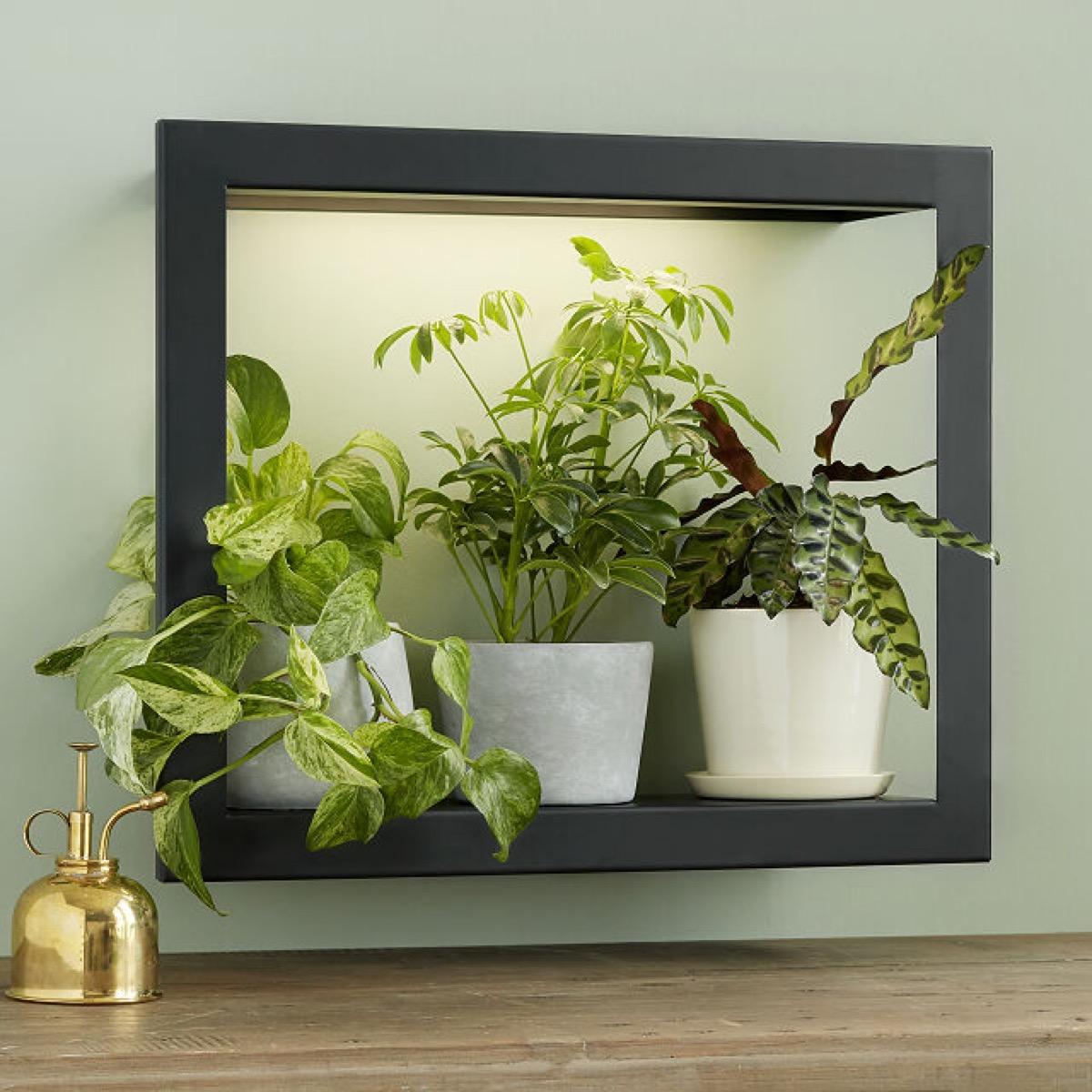 Plants in a modern grow frame