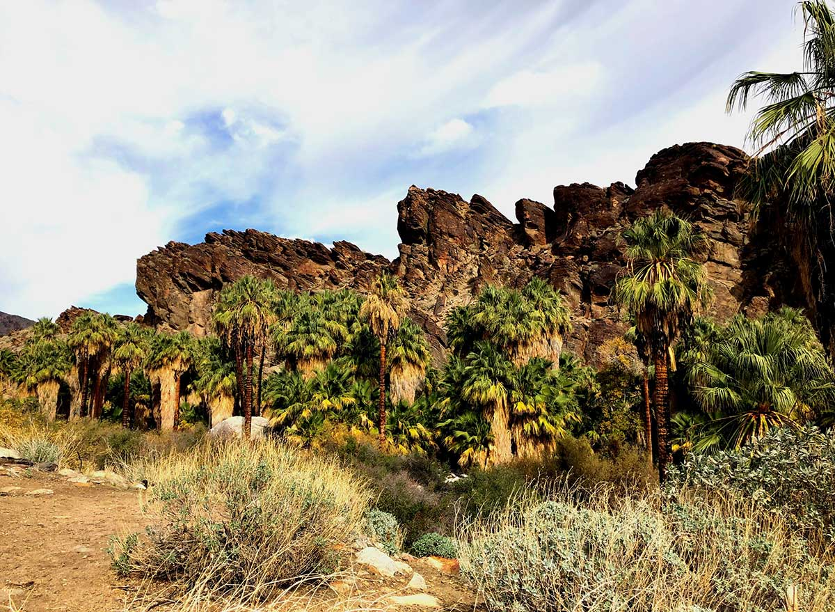 palm trees in a canyon