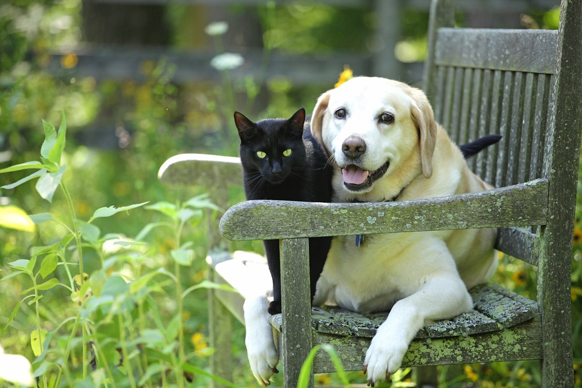 dog and cat on garden bench