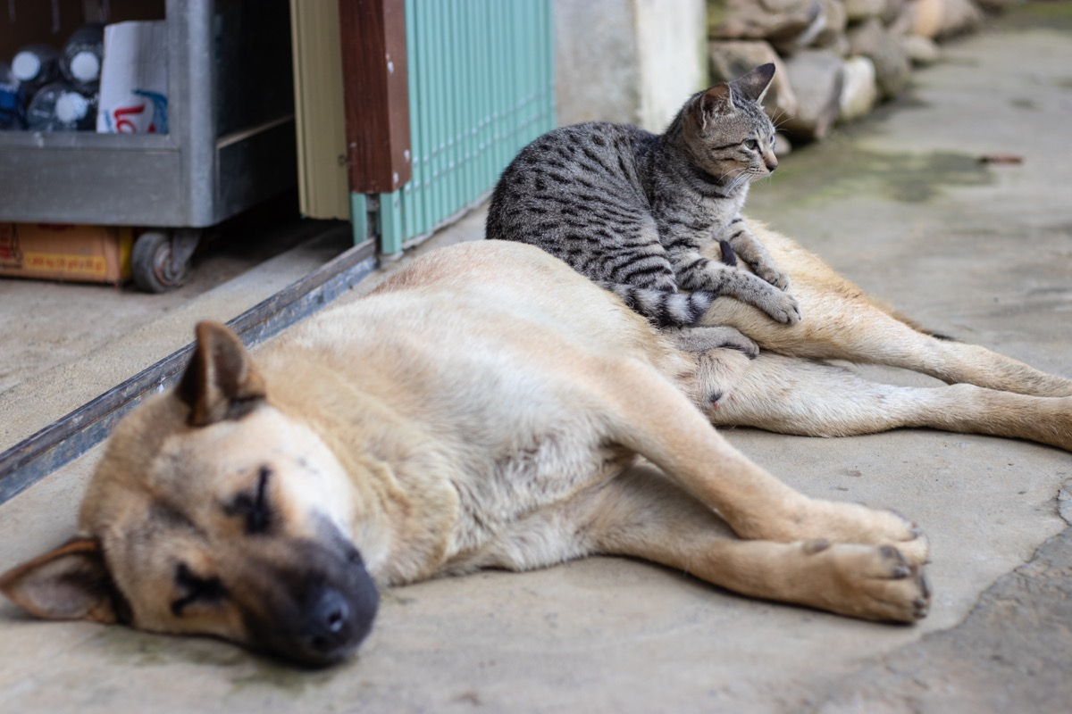 Cat sitting on a dog hanging out