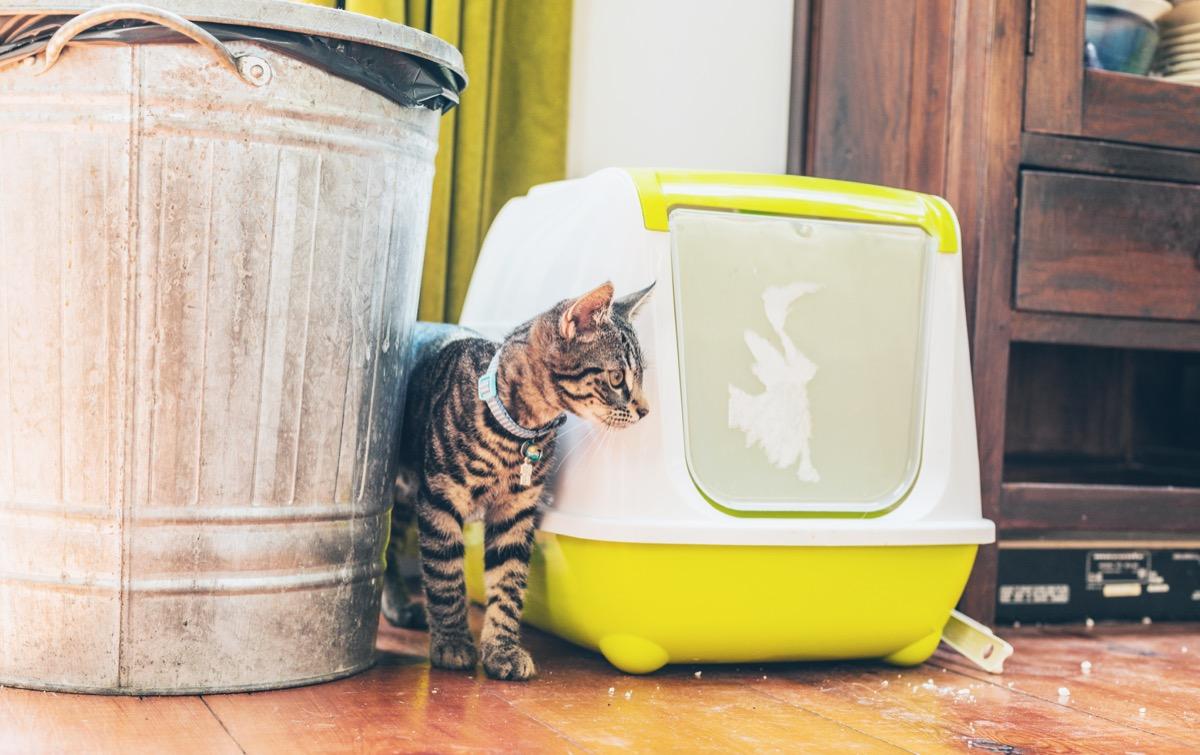 tabby cat next to yellow litter box