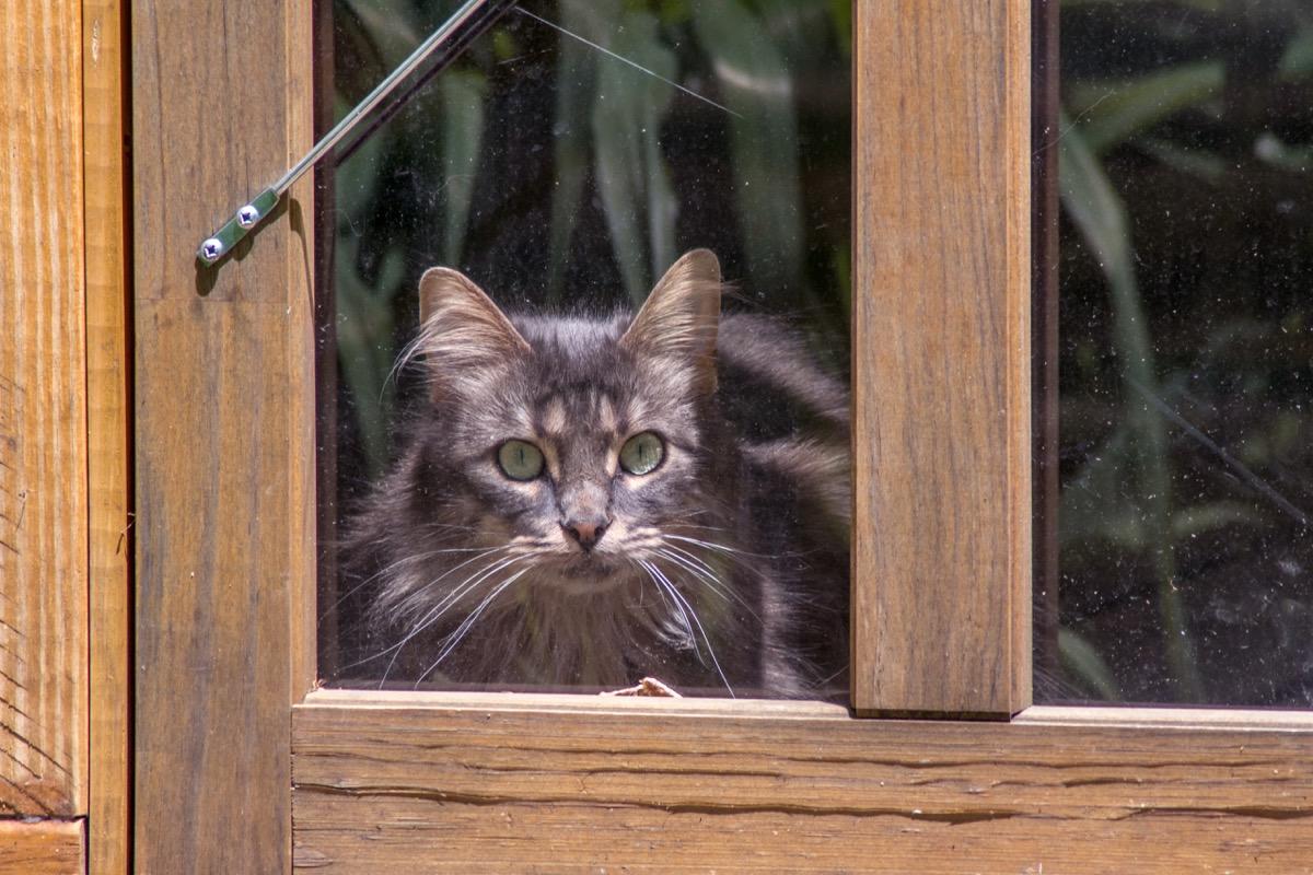 gray cat outside glass door