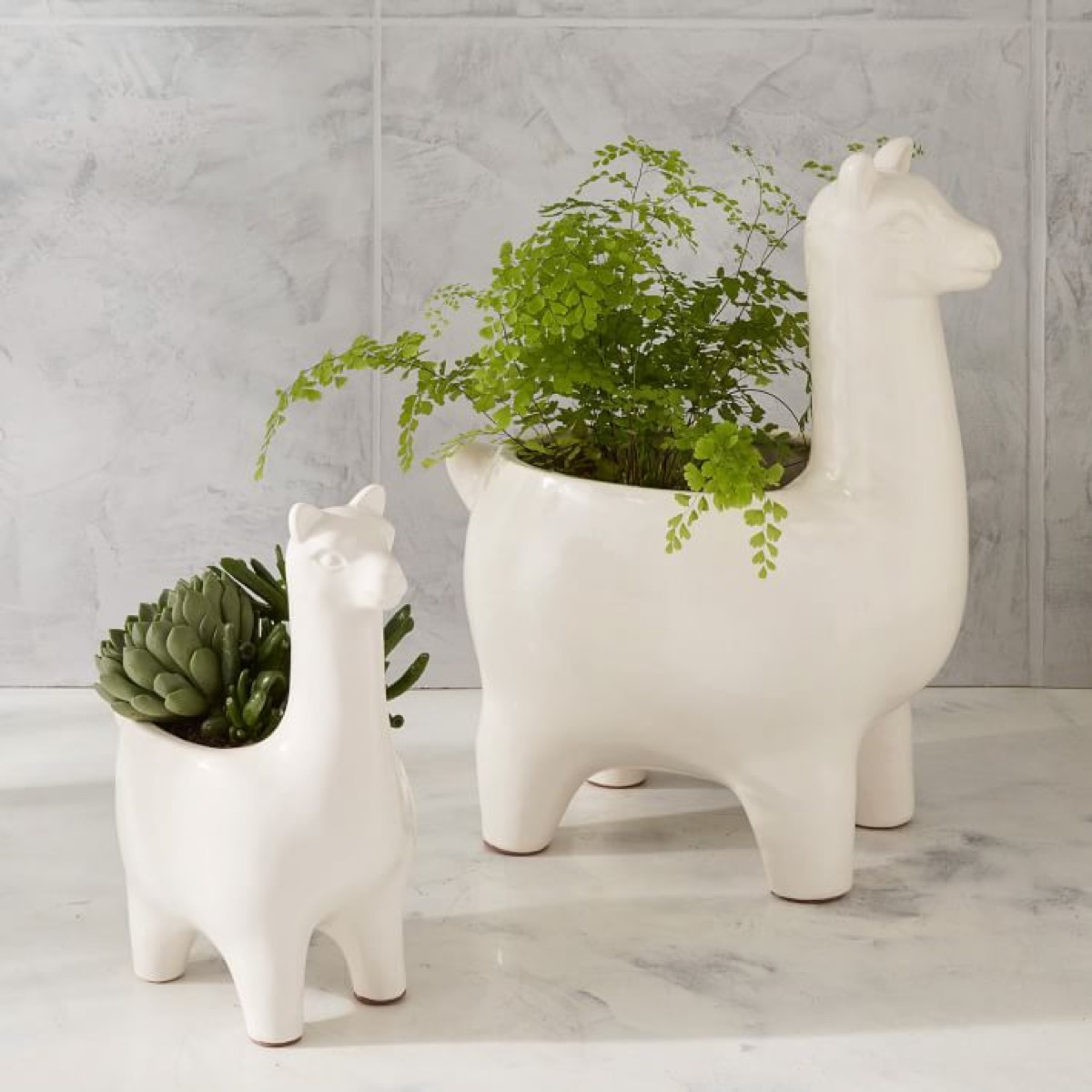 Two sizes of llama planters with plants