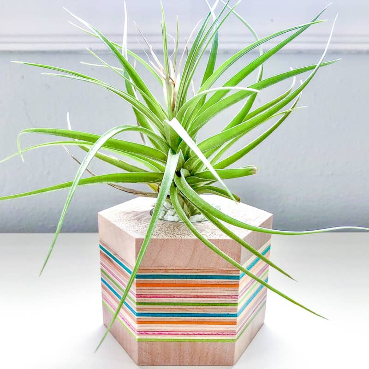striped plant holder