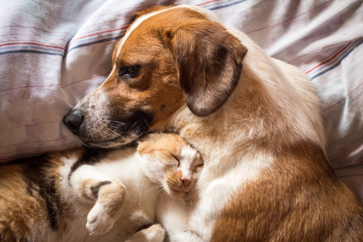 Dog and cat cuddling in bed