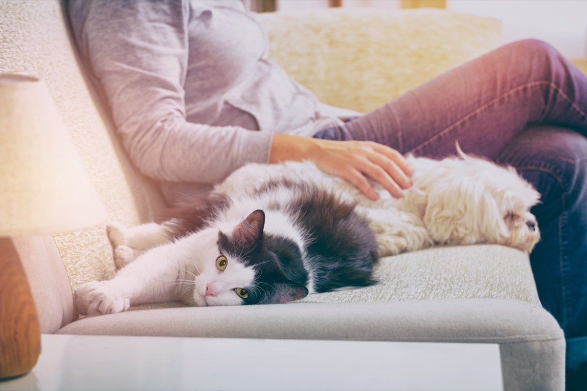 Dog and cat cuddling with their human on the couch