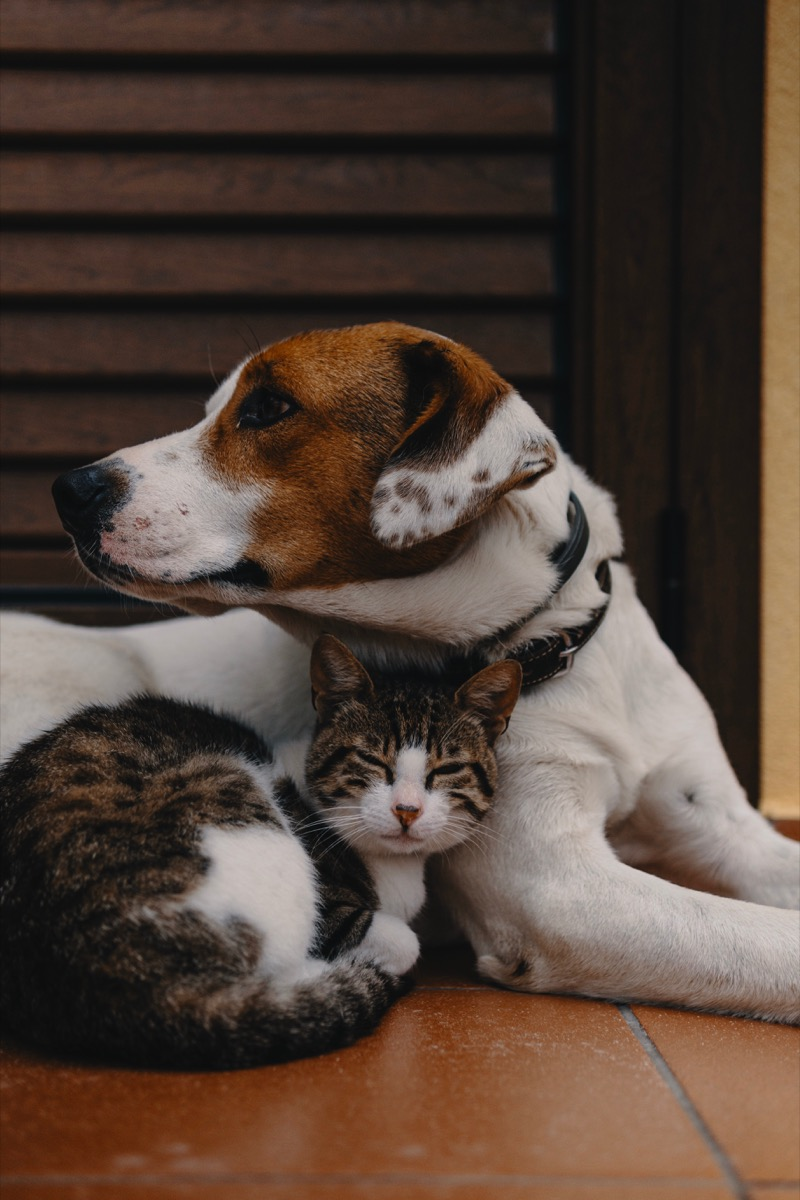 Dog and cat being cute and cuddling together