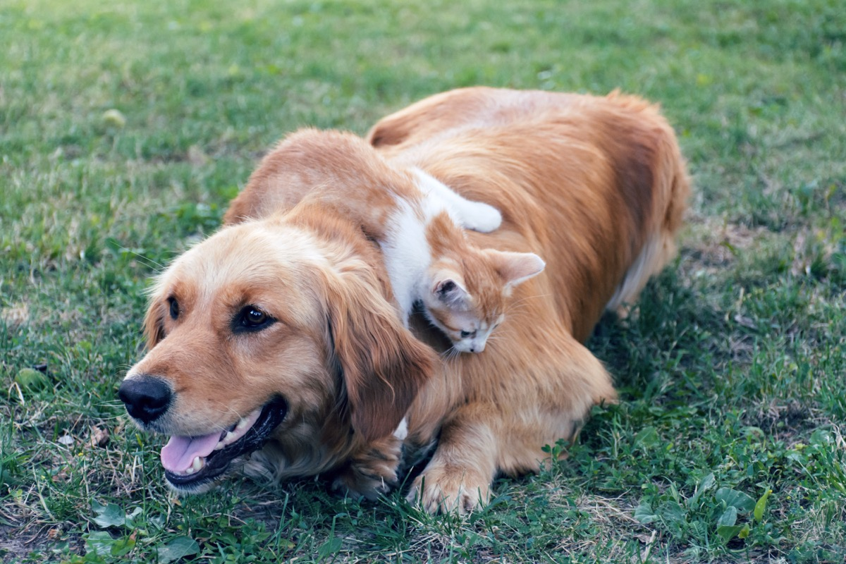 Dog and cat together on grass