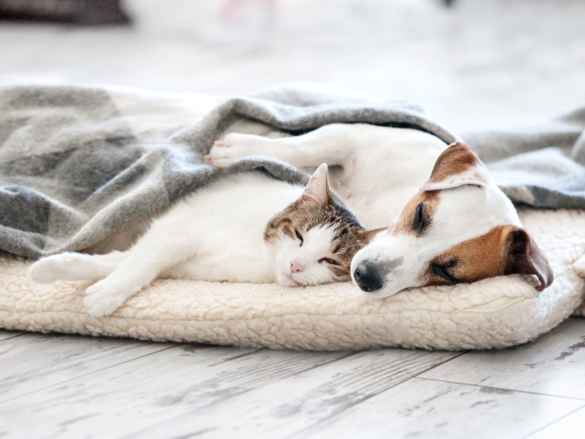 Dog and cat sharing a bed and cuddling together