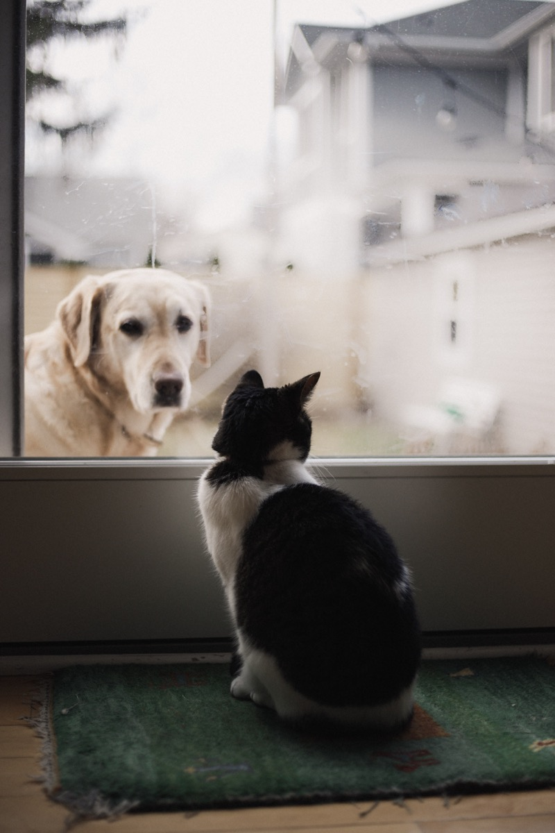 Dog and cat staring at each other through a window