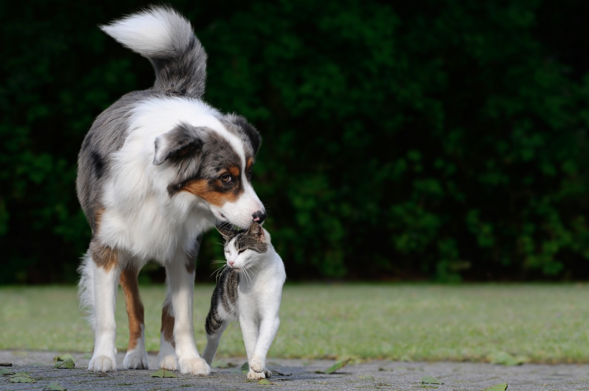 Dog sniffing a cat's head being cute