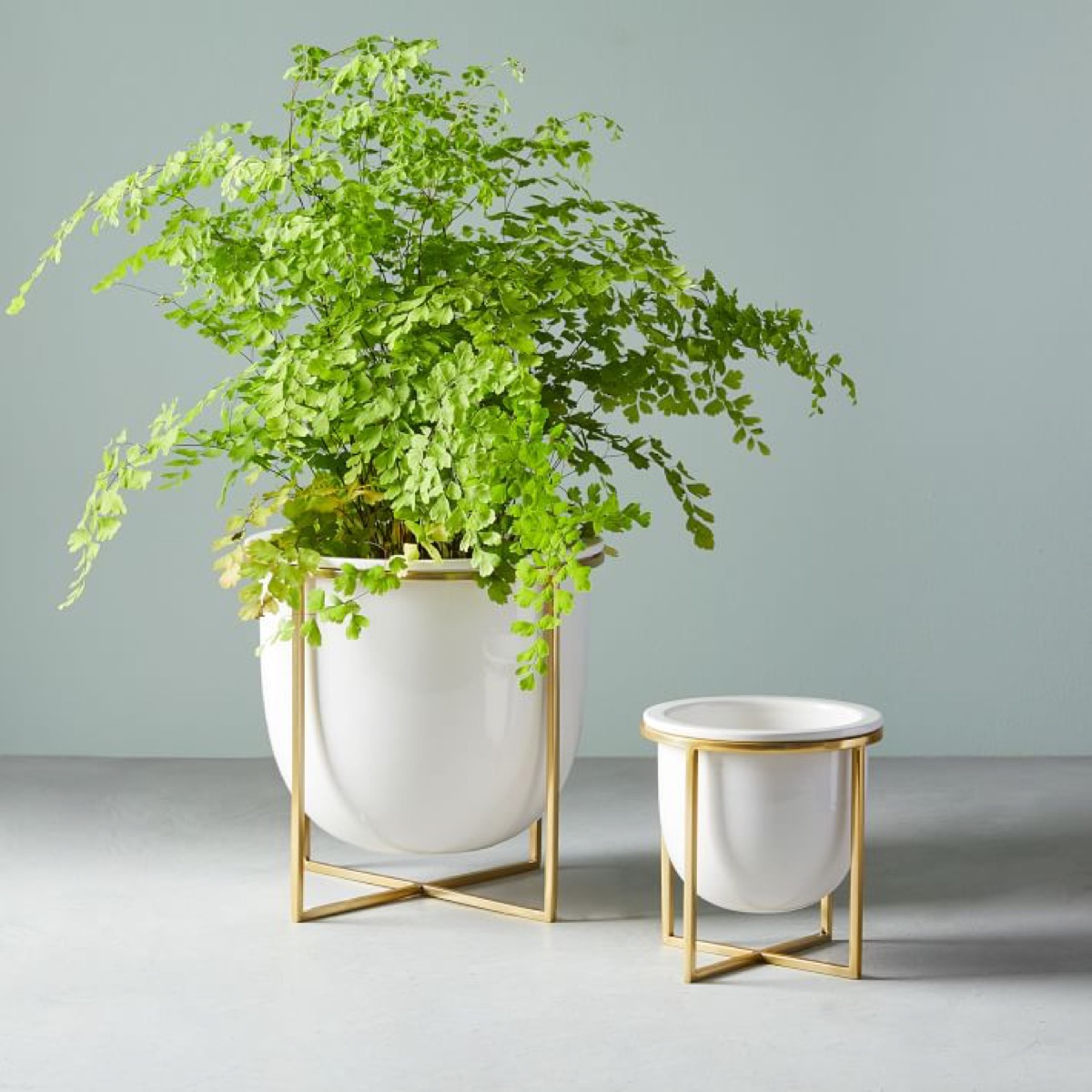 Ceramic and brass planters with plant