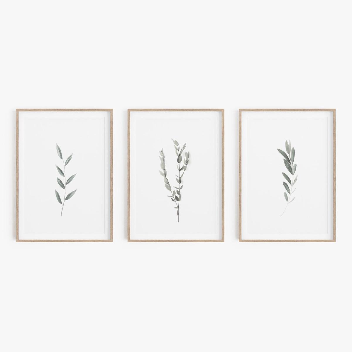 set of three botanical prints on wall