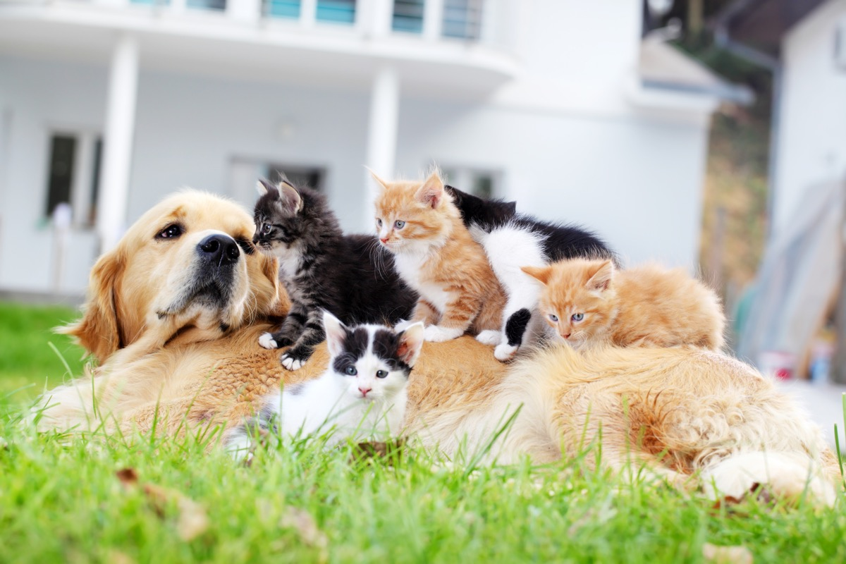 Dog and little cats together, enjoying on green grass.