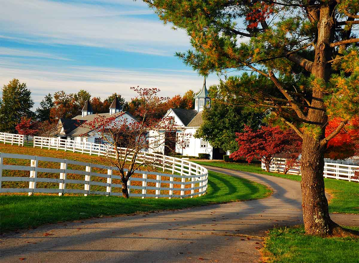 a road in kentucky's horse country