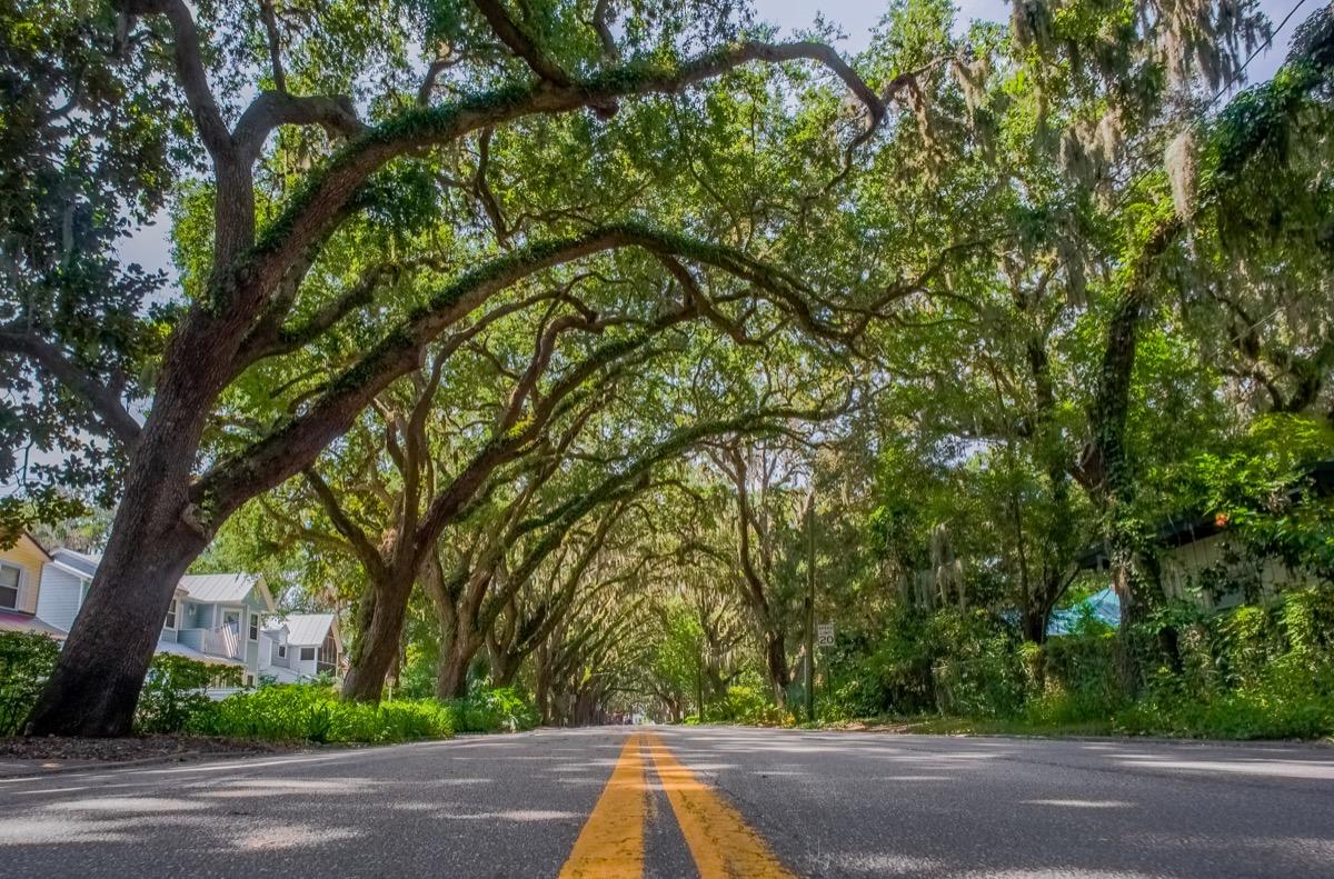 magnolia street florida