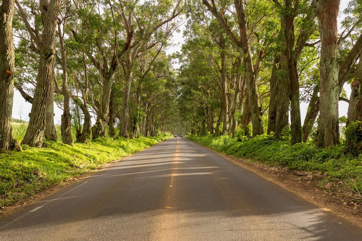 maluhia road kauai hawaii