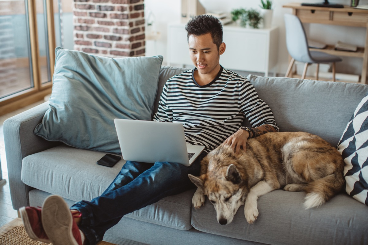 young man sitting on sofa and reading something on laptop, he prepare for exams with his pet dog is next to him