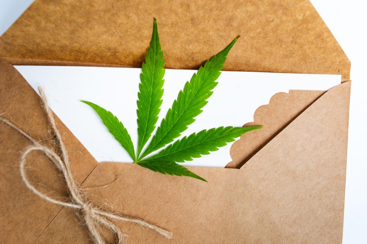 Marijuana leaf in an envelope close up