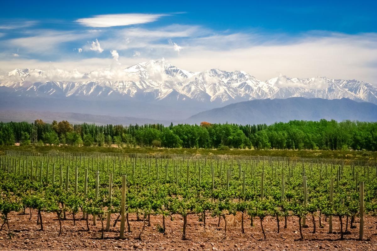 Mendoza Argentina vineyard and mountains