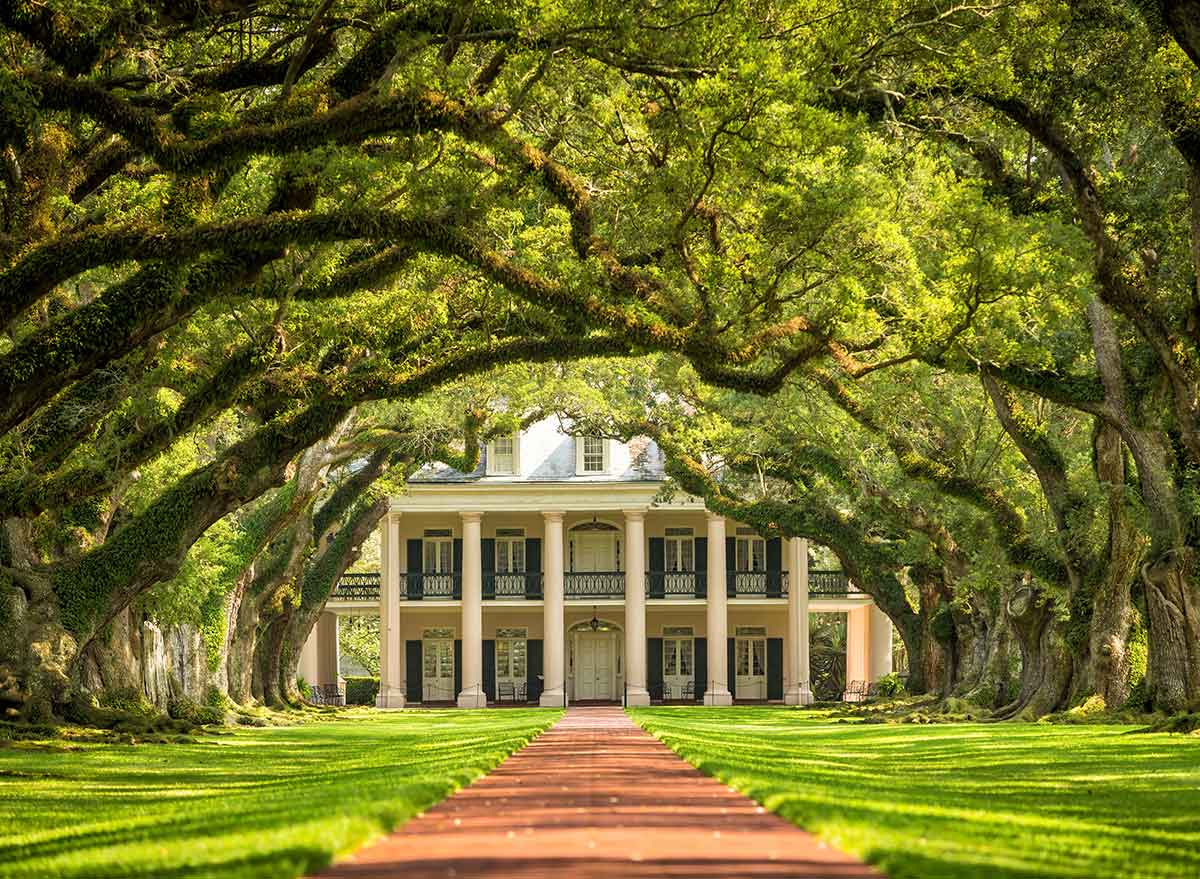 an alley of oak trees line the drive to a plantation